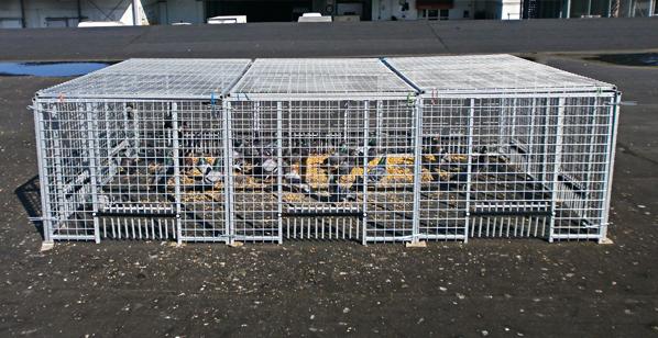 Piégeage pigeons